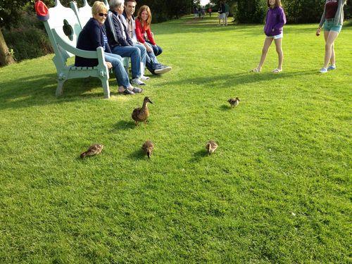Charlecote Park - duckies